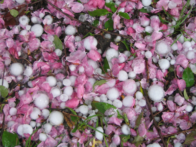Hailstones and Petals